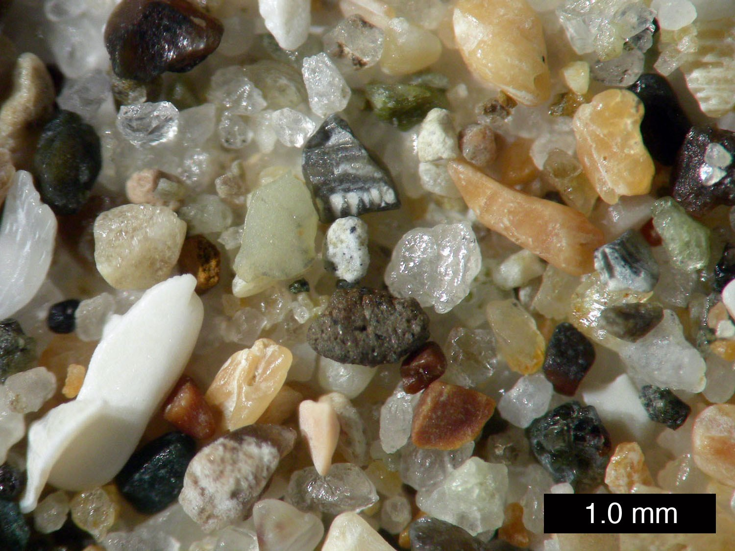 close up of individual grains of sand
