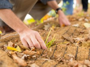 Hands sifting through the dirt