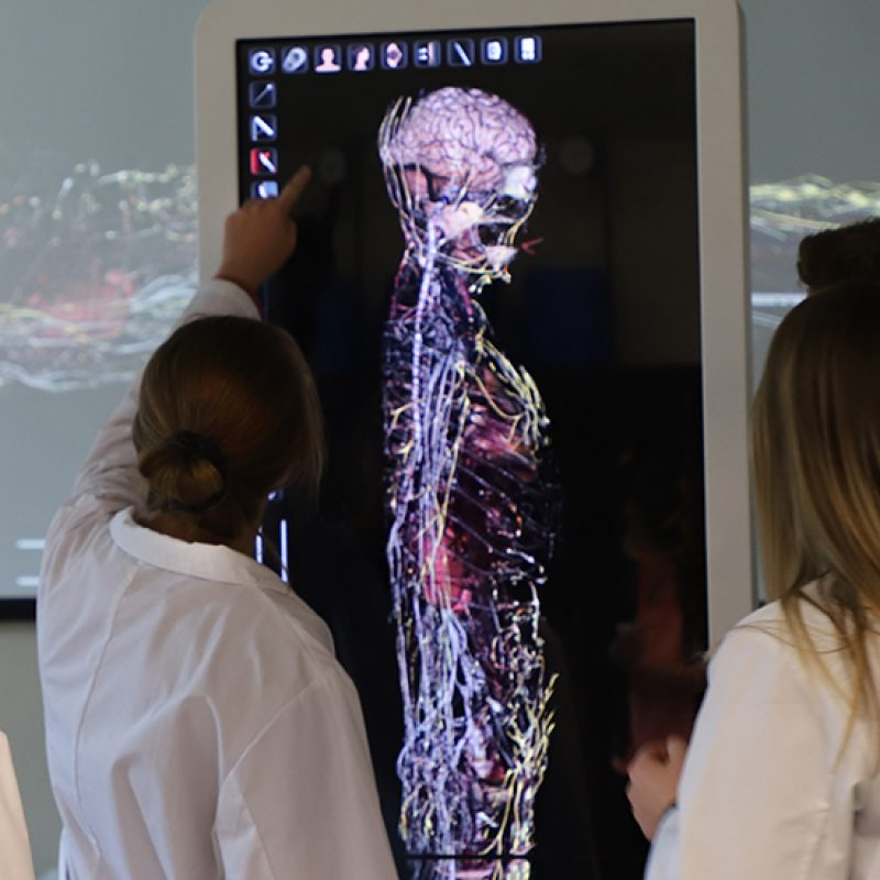 Students using a life-size digital cadaver lab